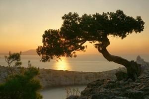 маслина300